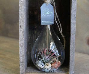 air-plant-in-teardrop-hanging-vase_1