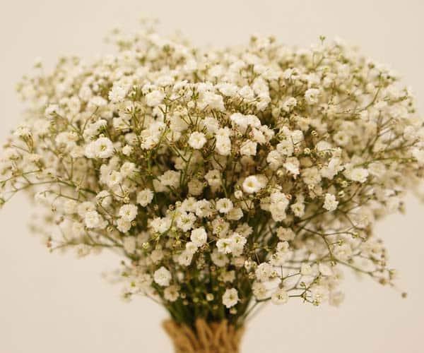 bouquet-25-c