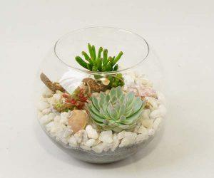 succulent-04