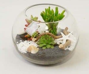 succulent-05