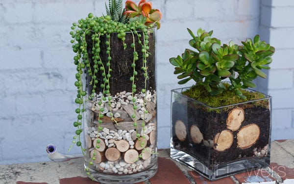 terrarium-featured